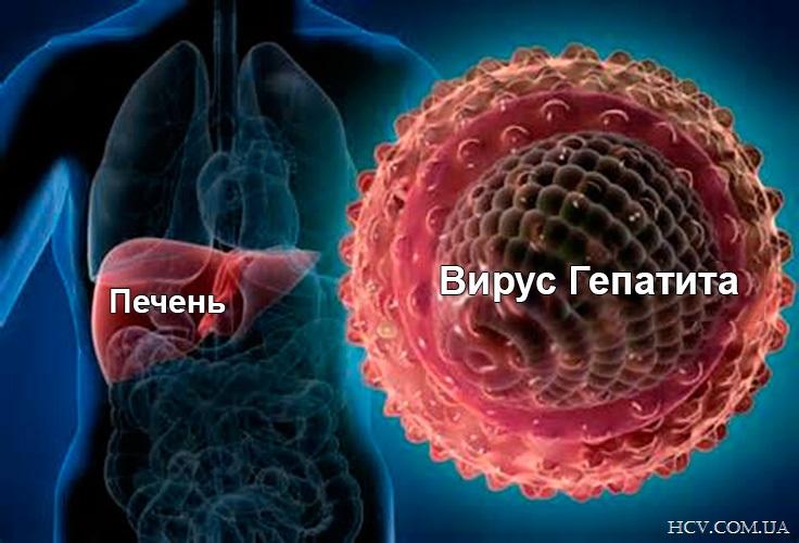 Гепатит. Существует пять типов вирусов гепатита (обозначенных буквами A, B, C, D и E)