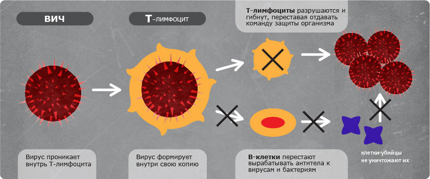 Иммуноглобулин М защитил от ВИЧ