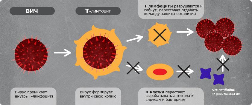 Тестирование на ВИЧ: общие сведения