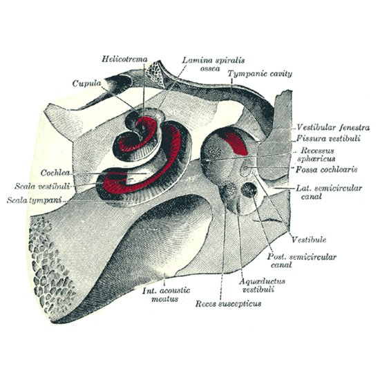 Головокружение: лечение периферической вестибулярной дисфункции